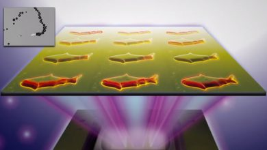 Photo of Medical Microfish? 3D Science Takes the Next Step